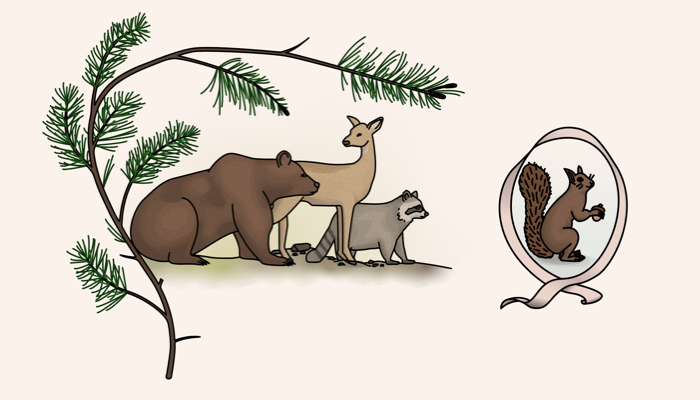 An excerpt of the map which features four animals: A bear, a deer, a raccoon, and a squirrel.